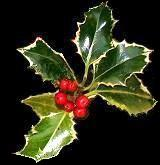 christmas holly with berries pic 1