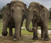 Elephants - slow and lumbering but full of character
