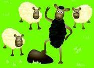 3 white sheep & 1 black sheep