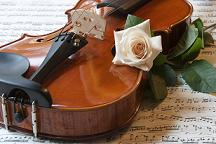 violin with flower