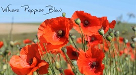 Where Poppies Blow - video image